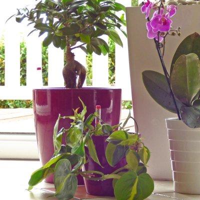 Sets für Hydropflanzen