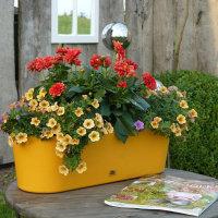 Blumen - Kräuterschalen
